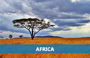 Africa Study Guides