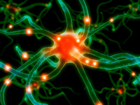 Active neuron in the brain