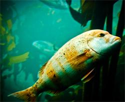Marine Biology psychology college sydney