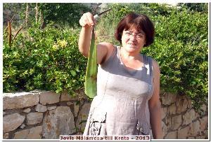 Fru Zampia visar upp en färsk Aloe Vera som hon skurit från trädgården!