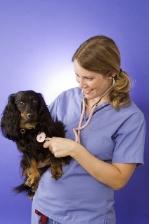 veterinär engelska