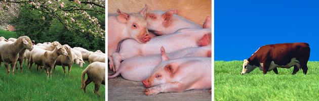 Eläintenhoitajan Koulutus